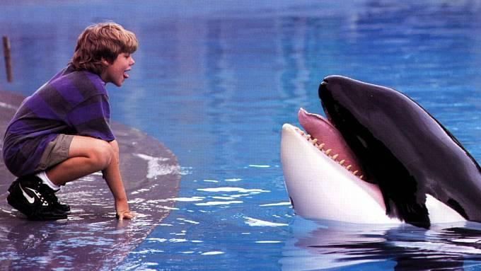 Díky filmu Zachraňte Willyho (1993) se vysvobození ze zajetí dočkal také Keiko.
