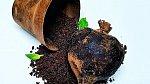 Převrhlý květináč s řepou. Všechno to je ale čokoláda!