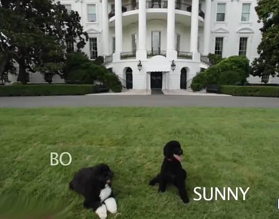Bílý dům donedávna obývali spolu s Obamovými jejic psi