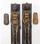 Anatomické modely ze sedmnáctého století. Samozřejmě v té době nebyla nouze o mrtvoly, ale studenti se museli učit na modelech, které ze dřeva, podle reálných modelů, vytvářeli dřevorytci.