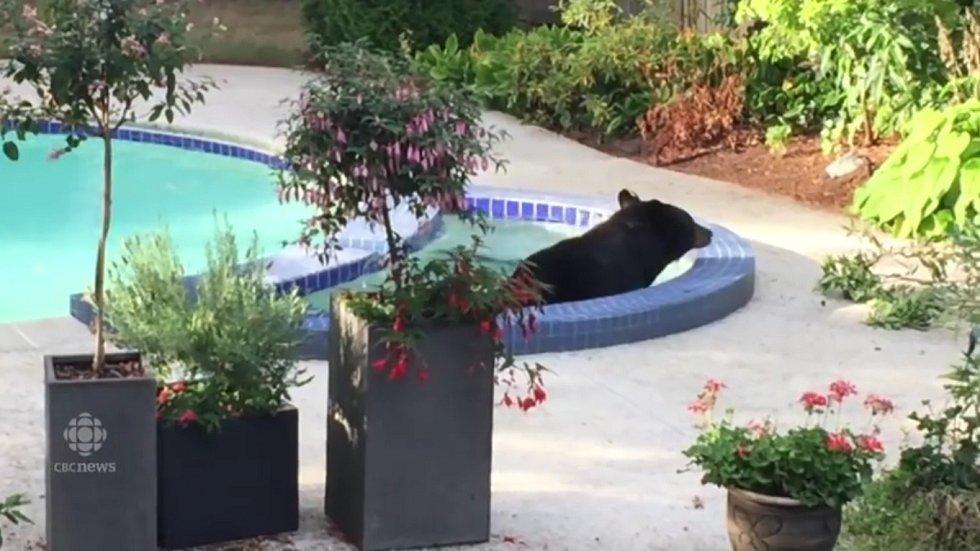 Tenhle medvěd ví, jak si užít život...