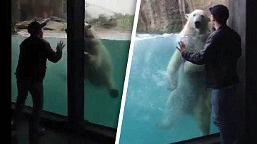 Hravé medvídě mělo nečekaně dobrou náladu.
