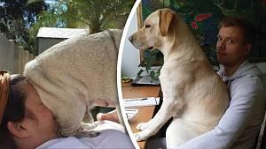 Pes umí svou lásku dávat najevo různě, i zalehnutím nebo zasednutím...