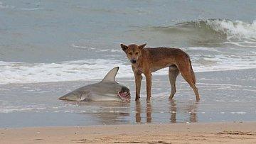 Život v Austrálii může být hodně nebezpečný