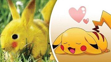 Živý Pikachu se měl objevit v Africe.