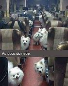 Autobus plný lásky.