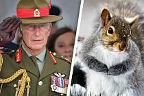 Princ Charles chce hlodavcům snížit sexuální apetit.