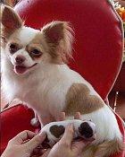 I když je to malý pes, má velké srdce.