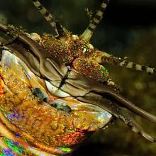 Mutant červa, nejen, že je nechutně velký, navíc se třpytí.