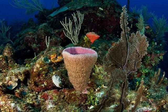 Podmořský svět a jedno zjeho pohádkových zákoutí.