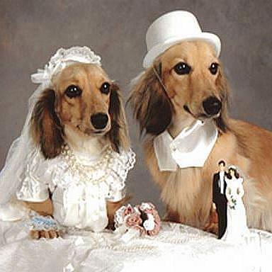 Psí svatba. Ilustrační foto.