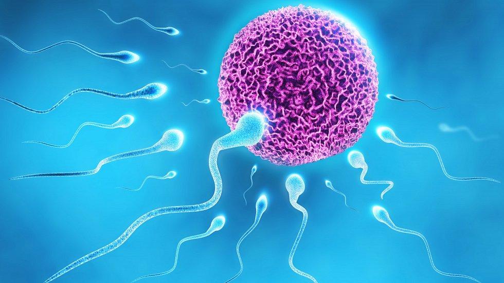 Kam až doplave spermie?
