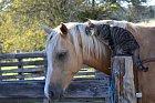Koník a kočička