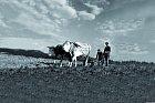 Na polích a vůbec v zemědělství našlo za Masaryka práci mnoho milionů lidí.