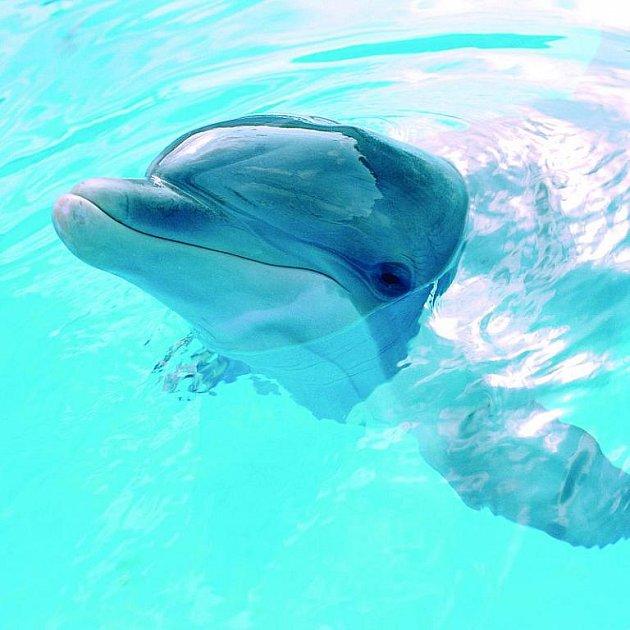 Úchylný delfín Moko