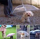 Deštník pro psy. Proč by měli naši miláčci moknout, že?