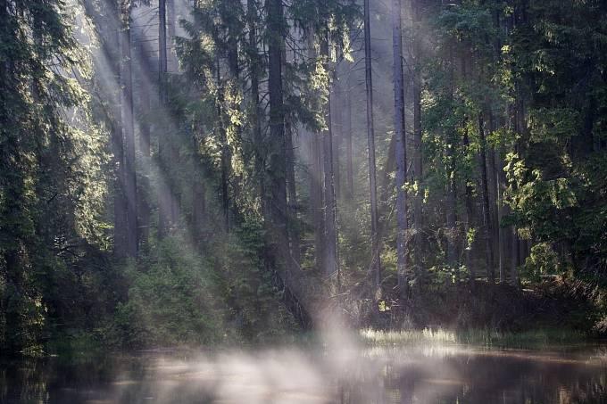 Boubínský prales (Jihočeský kraj)