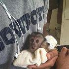 Opička Deze Bryanta