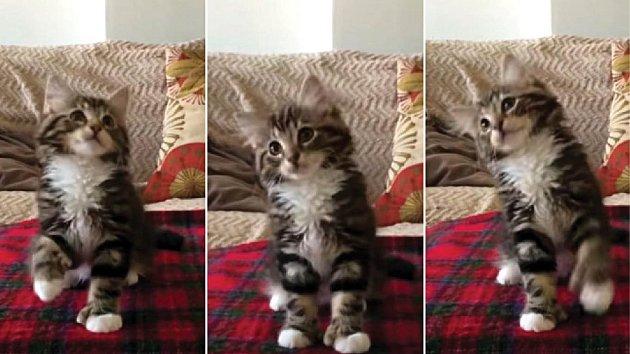 Tančící kotě si získalo miliony fanoušků.