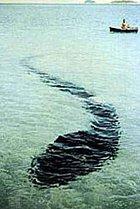 Horší než Lochneska? Tohle stvoření se v roce 1963 podařilo nafotit u australských břehů Robertu Le Serrecovi. Mnoho expertů se podařilo zjistit, co za stvoření vlastně zvěčnil, ale dosud se na to nepřišlo.