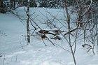 Zprvu vše nebylo vidět pod nánosy větví a sněhu.