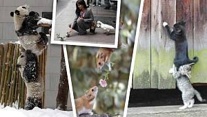 Ve světě zvířat je spolupráce téměř na denním pořádku.