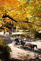 Uličkami parku se turisté mohou proplétat také vkočáru.