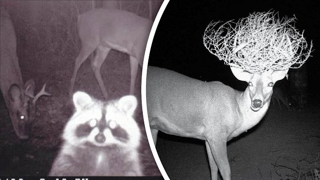 Obyvatelé lesa dokáží stále překvapovat.
