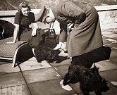 Adolf se psy svého známého.
