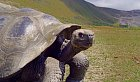 Nejen k želvám se dostanete na metr.
