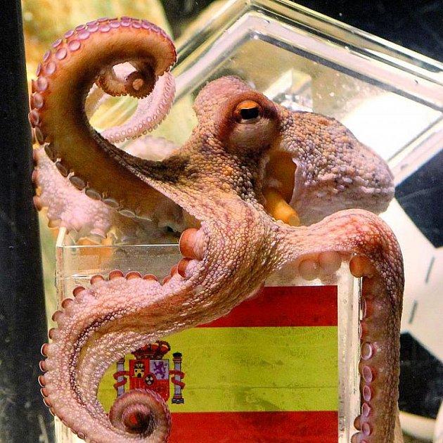 Chobotnice Paul zemřela