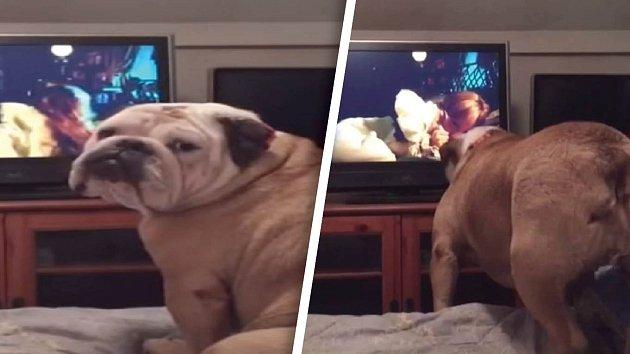 I pes si může dělat starosti o hlavní hrdinku filmového příběhu.
