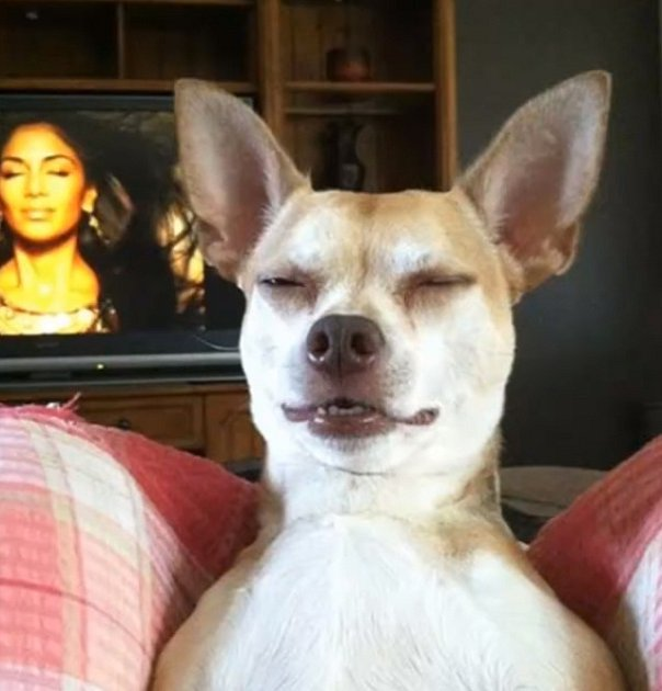 Beyoncé vzenu a pes vzenu.