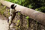 Proč se zvířata vrhají přes zábradlí je dosud nejasné.