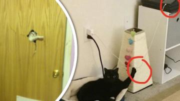 Kočky jsou zplozenci pekla