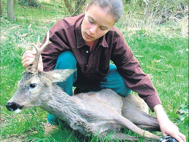 Hana Robejšková vypustila srnce do přírody na louce v Zábělé.