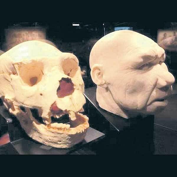 Homo antecessor podle rekonstrukce