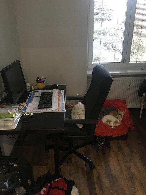 V pracovně tráví Aneta nejvíce čas.