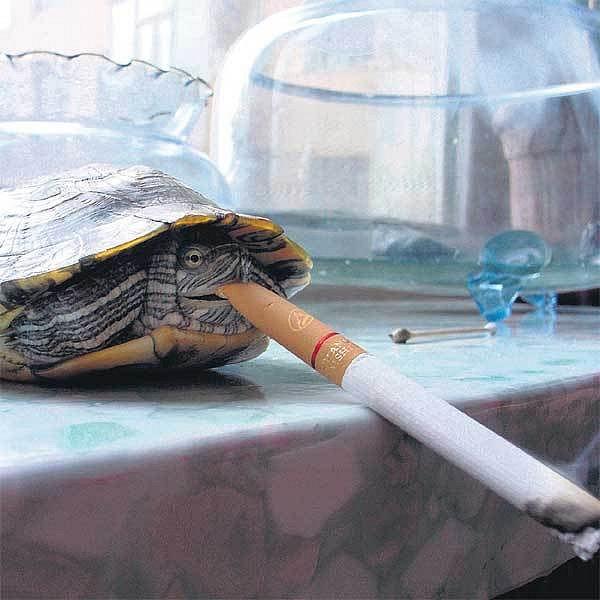 Želva si musí dát pár šluků denně.