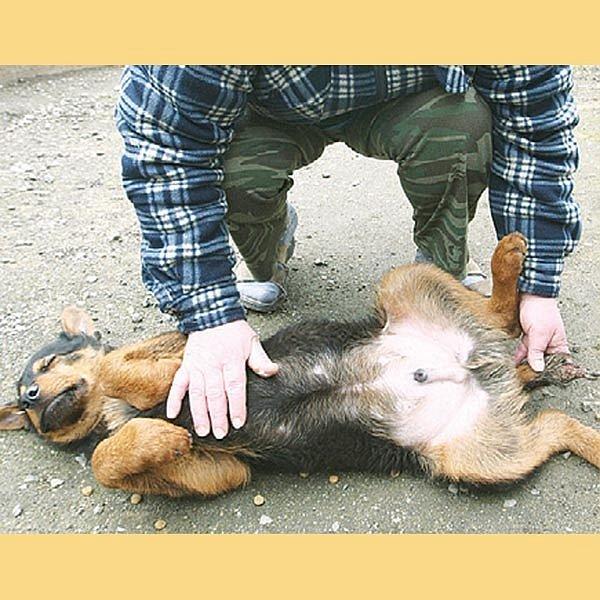 Pes se dostal do psího útulku v Řepnicích.