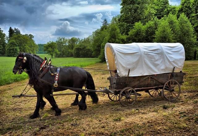 Vúdolí jsou často akce pro turisty – po polích se třeba prohání tažní koně.