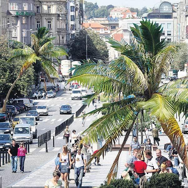Za pár desítek let by mohly Václavák zdobit vzrostlé palmy.
