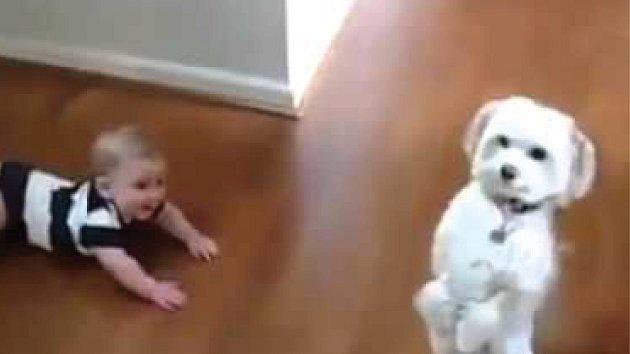 Pejskové jsou někdy v šoku, co děti dokáží.