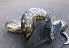 Hadi jsou v Austrálii extrémně výkonní.