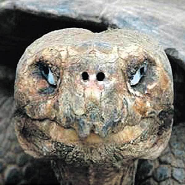 Sedmdesátiletá želva