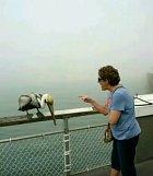 Babička, která hubuje pelikánovi je skvostná.