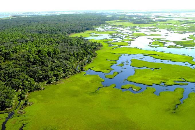 Betzovi našli kouli vbažinaté pustině naseveru Floridy.