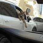 Život v Dubaji vypadá jako velmi příjemný zážitek.