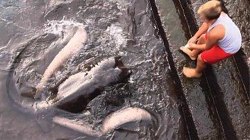 Chlapec si u vody našel nečekaného kamaráda.