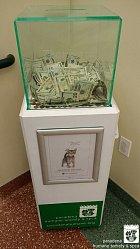 Štědrý dárce věnoval na koťátka 8 tisíc dolarů.